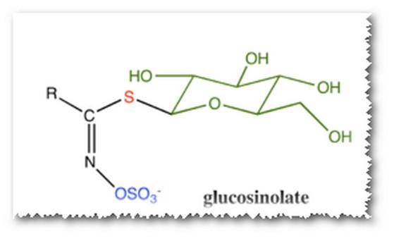 глюкозинолаты