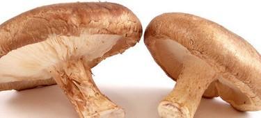 гриб шиитаке